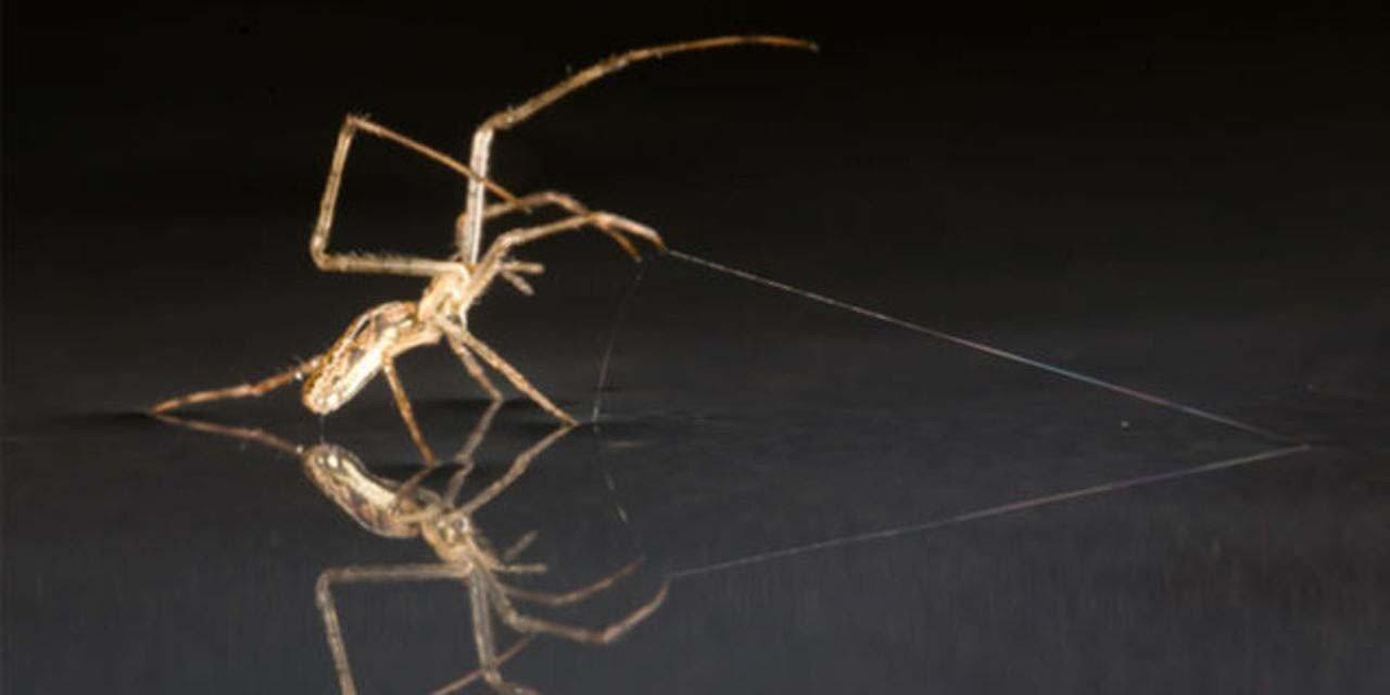 據研究,目前已知多達44000餘種不同的蜘蛛,一小部分會透過注入毒液進行狩獵或防衛, 其中有至少200種的蜘蛛會叮咬人類,威脅著人類的健康安全,之中甚至有27種蜘蛛具有致命危險。