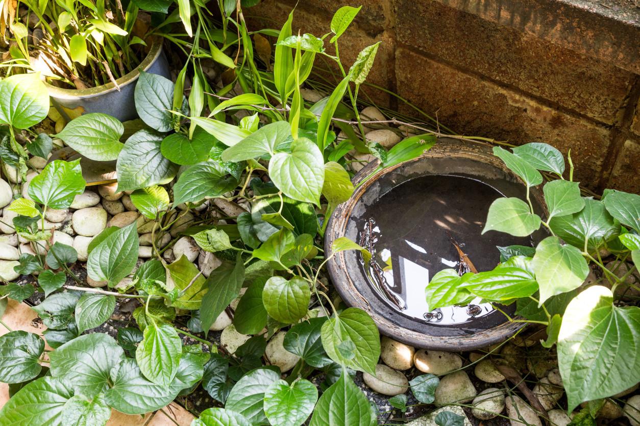 不咬人一樣讓人抓不停:「跳蟲」跳蟲,又稱彈尾蟲,牠們總是在浴室、植栽附近等潮濕環境跳來跳去,以苔癬、真菌與腐敗的物質為食。 潔肯除蟲公司
