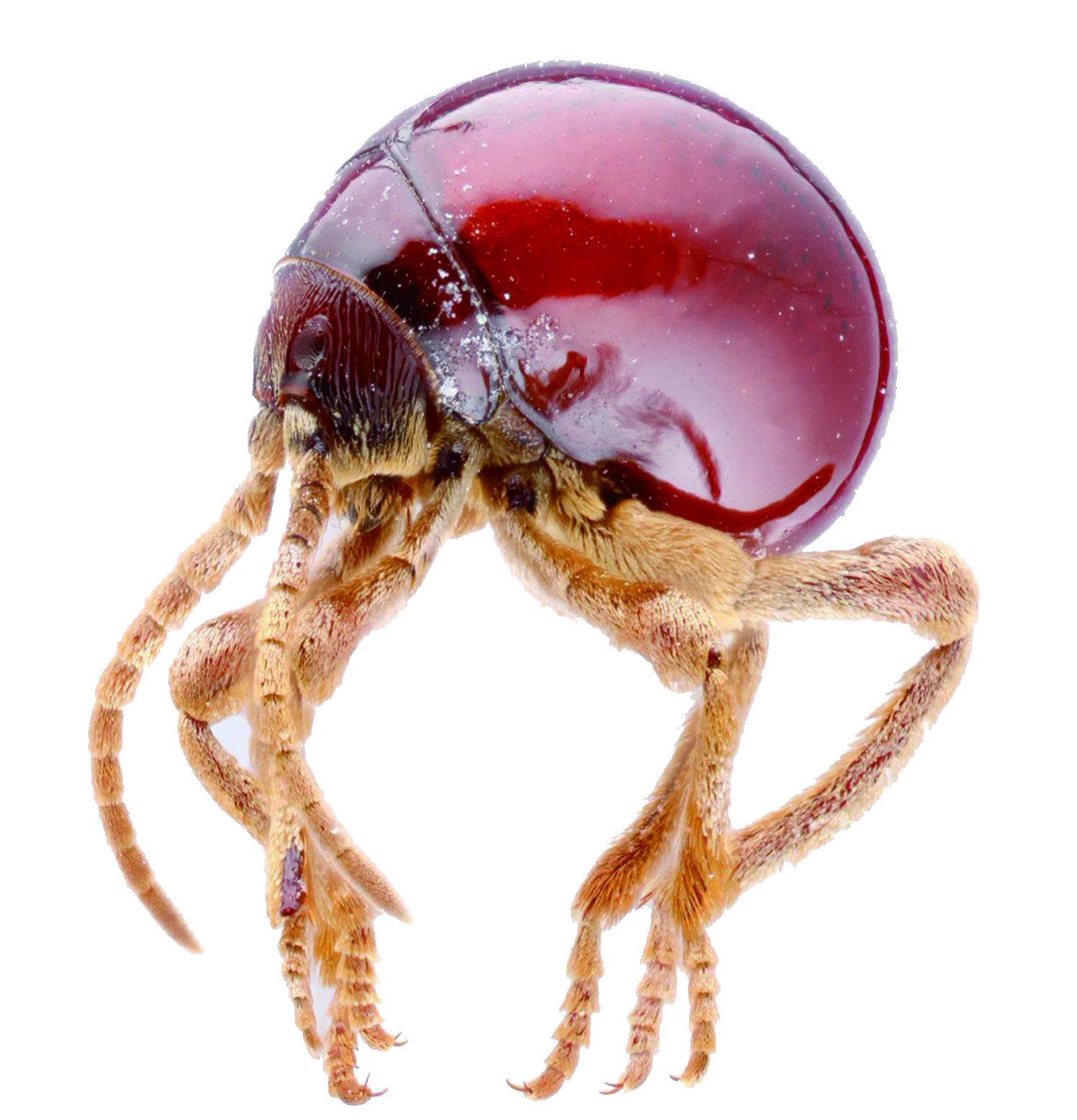 【除蛛甲】家裡出現長的像蜱蟲的蜘蛛,如何避免蛛甲大量繁衍危害  !!