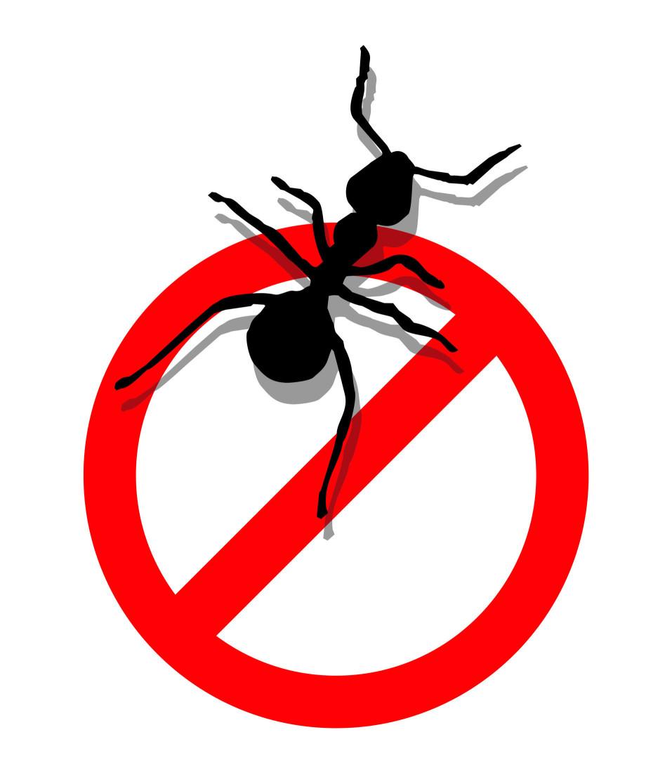 螞蟻可以從牆壁或是地板的縫隙,或是可以通過排水管道等入侵到住宅,通常,大部分入侵房屋的都是工蟻。