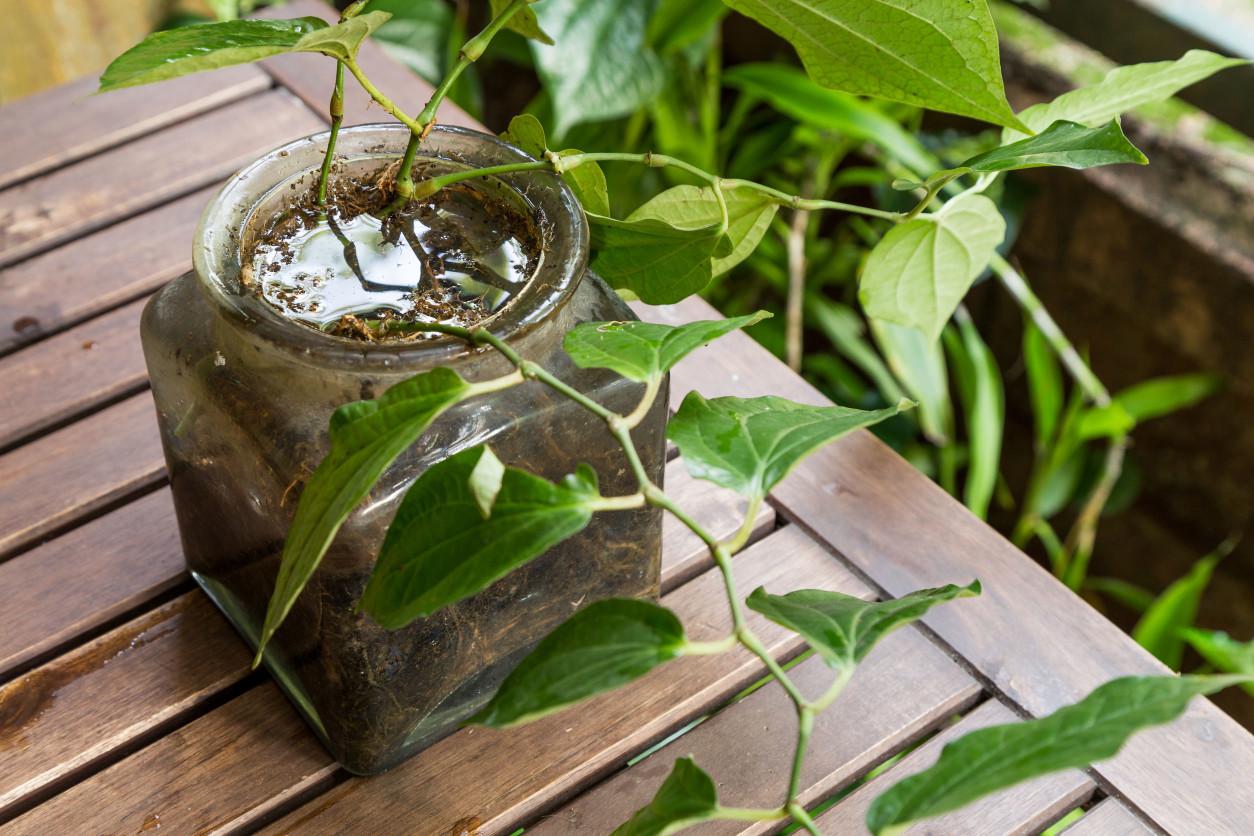 我們經常在陽台種植植物,經常會利用廢棄瓶子裝水,容易成為蚊子幼蟲孳生處