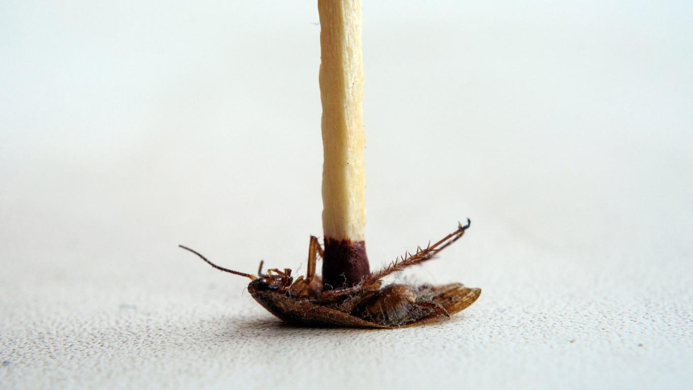 【除蟑螂】完全防治蟑螂的方法,介紹簡單消滅驅除蟑螂的對策