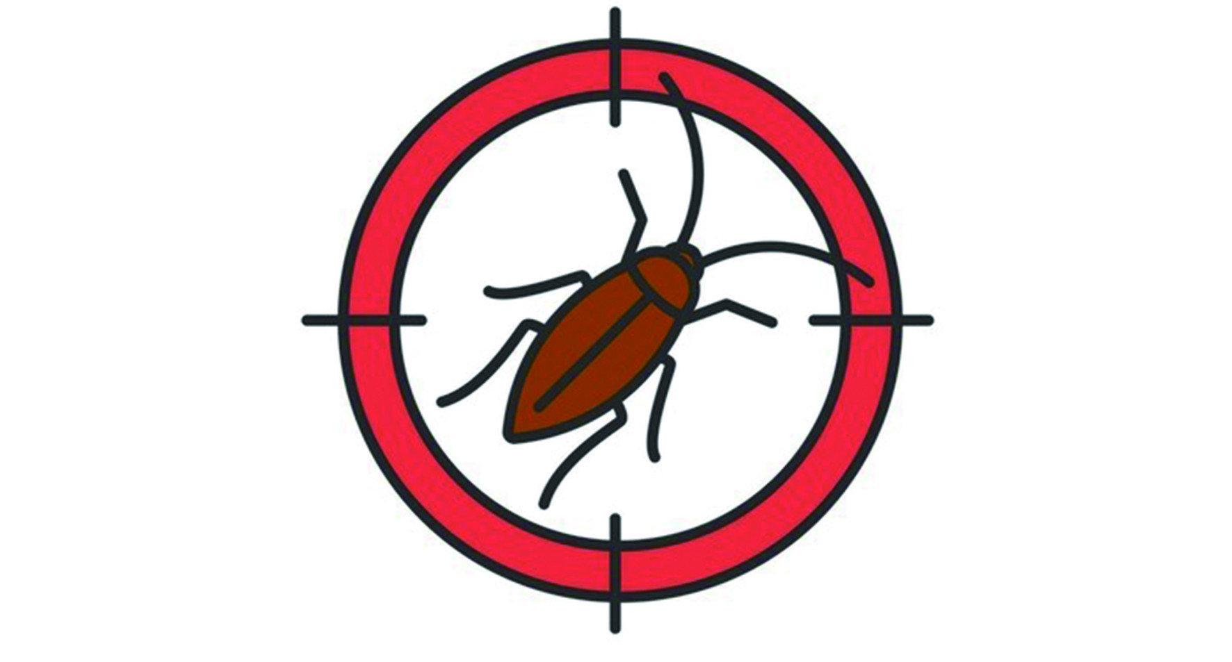 居家害蟲之首:蟑螂,蟑螂-大概是最常見的居家害蟲,也是令最多人驚懼、頭痛不已的頑強昆蟲。