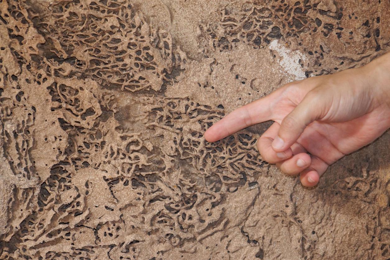 白蟻對於木材造成的損害,常常造成許多巨大的財損,甚至有可能影響到住宅的安全性,因此發現白蟻,一定不可以輕忽