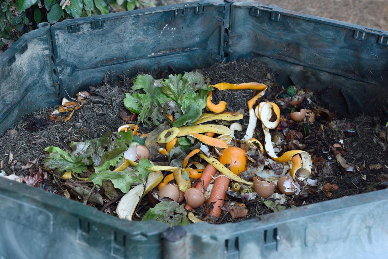 肉蠅經常都在腐爛的肉類、糞便或是腐敗的物質上面產下蛆