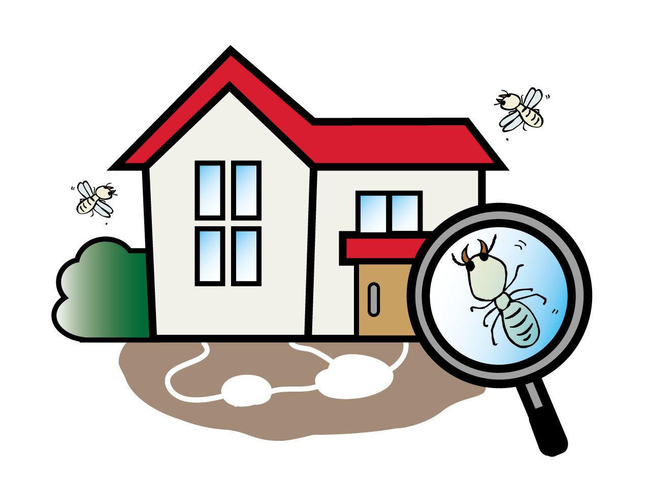 【除白蟻】下雨天出現許多四處飛舞的飛蟻,千萬不可置之不裡,木製家居恐遭破壞殆盡 !