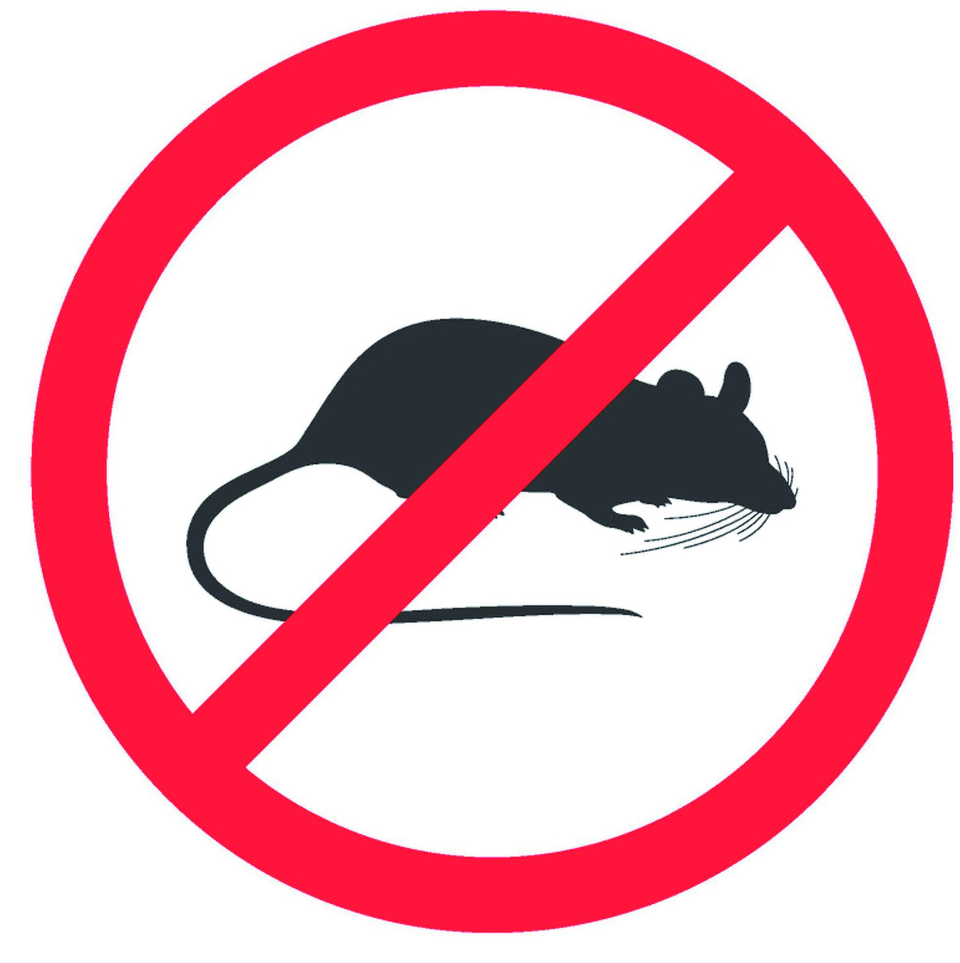 『滅鼠』老鼠造成的傳染性危害疾病