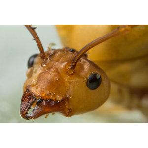 『除螞蟻』花園裡有很多螞蟻築巢,螞蟻是害蟲還是益蟲 ?