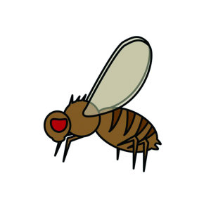 【除蚤蠅】如何預防化糞池最骯髒小蒼蠅之一「蚤蠅」