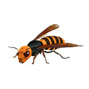 【除長腳蜂】體型很大卻很溫柔的長腳蜂,具猛烈攻擊性的虎頭蜂 !