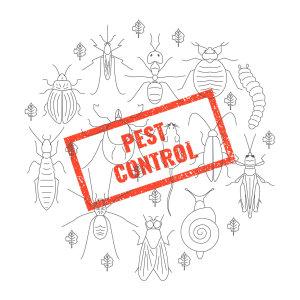 『除蟲公司』環境中常見的害蟲與老鼠防治