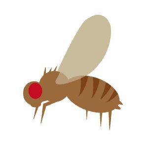【冬季果蠅】出乎意料的問題,別以為只有夏季果蠅多!