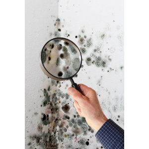 『除黴菌』住宅濕氣重,掌握五要點,黴菌不再來