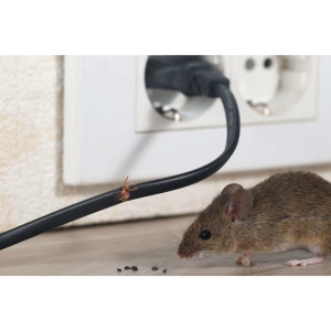 『除老鼠』家裡天花板有老鼠,教你擺脫老鼠大便的危害