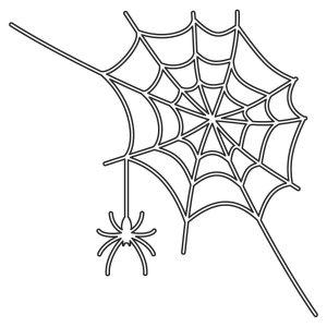 【除蜘蛛】蜘蛛是有益的昆蟲還是害蟲呢?像昆蟲卻又不是昆蟲的不速之客 !
