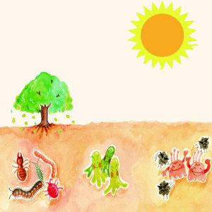 【除跳蟲】土壤生物分解代表之一,四處彈跳的白色小蟲子 !