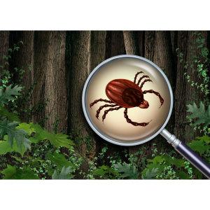 『除壁蝨』小心蜱蟲個頭小危害大,戶外活動要謹慎