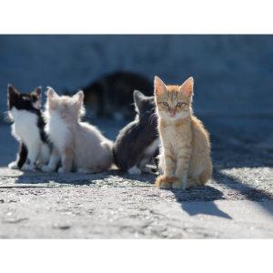 『野貓驅離』貓咪放養的三大危害