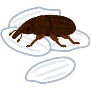 【除米象】有著「象鼻」的小蟲,米象不是象,也不只吃米 !