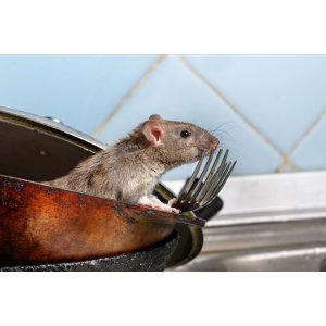 『滅鼠服務』-解決餐廳、食品工廠、住宅設施等的問題