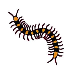 【除蜈蚣】突然從天花板上掉下來的蜈蚣,光想到就讓人聞之色變 !