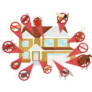 『蟲害問題』各種顧客對於害蟲防治常見問題