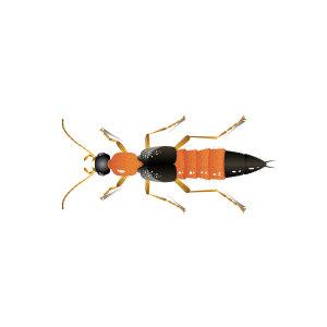 『隱翅蟲』小心戶外活動遭受攻擊皮膚潰爛