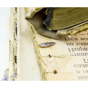 『除衣魚』書櫃多年收藏書籍,都遭受啃食破損