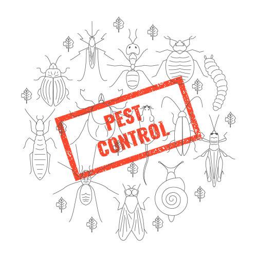 【除蟲公司】環境中常見的害蟲與老鼠防治