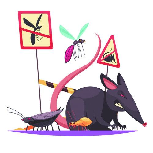 『滅鼠』牆壁發出嘎吱嘎吱聲音,防治老鼠常見問題學問大